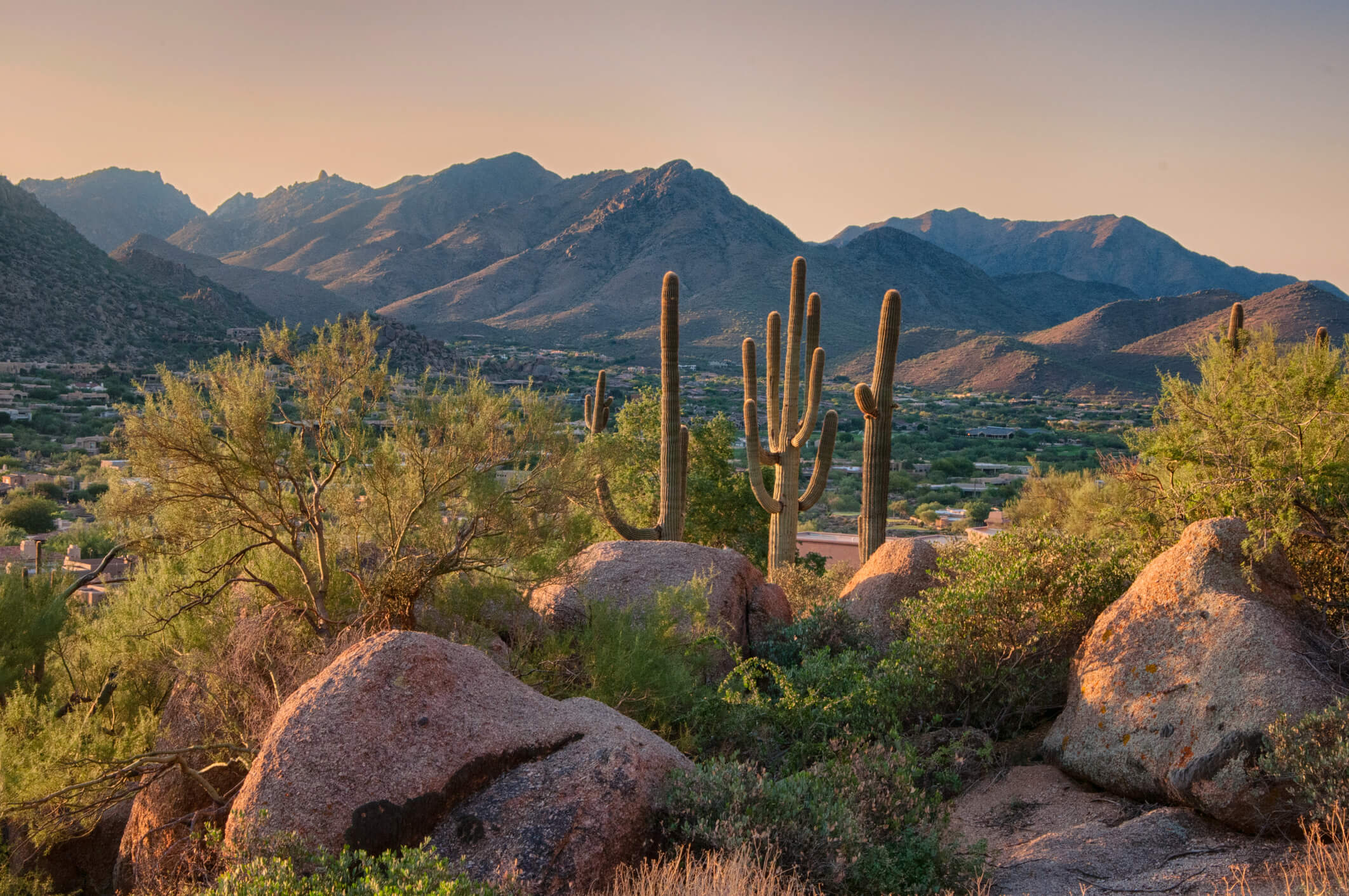 Risks of Living in Arizona: Which Animals Should You Avoid?
